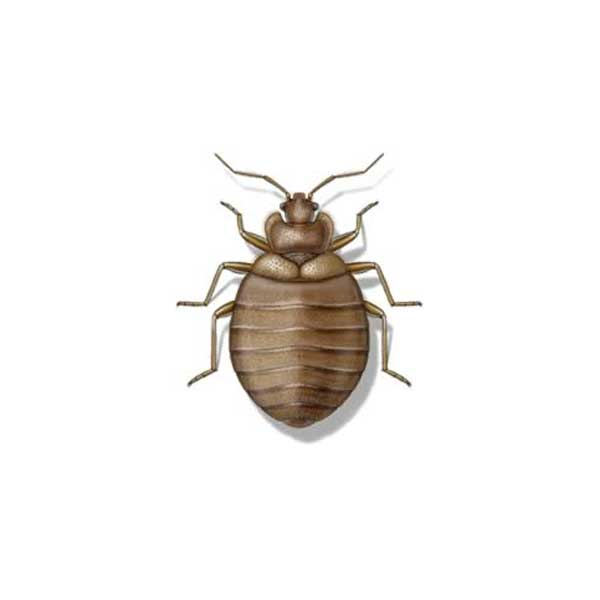 New Mexico Pest Control provides information on bed bugs in Santa Fe and Albuquerque NM.