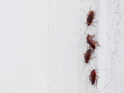 Signs of a cockroach infestation in Santa Fe NM - New Mexico Pest Control